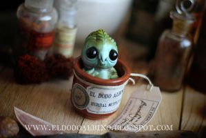 Cabbage mandrake sprout by dodoalbino