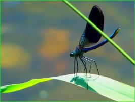 Dragonfly 3 by indja-art