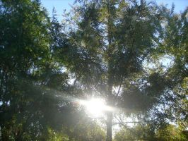 Sunlight Through Trees by jess13795