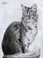 CatPencilDrawing by artist2point5