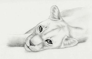 Lioness by MoonlightGuardianOwl