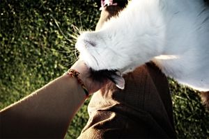 Cat attack by BlueLint