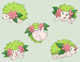 Pokemon Base 66~Shaymin 3~ by Xbox-DS-Gameboy