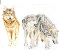 Wolves - Dominant by Ara-Tun
