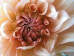 Flower Pink - 032 by lexidh-stock