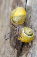 couple of snails by GuillaumGibault