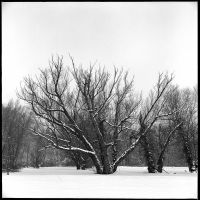 Snowy morning - Jan 2011 by pearwood