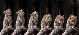 Leopard cub motion2 by brijome