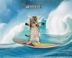 Surf Kitty by jantheempress