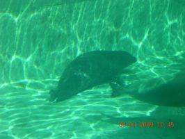 Seal by eires666