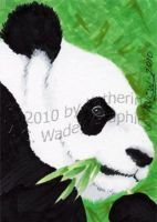 Panda - ACEO by keight