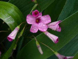 Pink flowers after rain 4 by TinyWild
