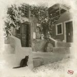 Santorini cat II by AlexGutkin