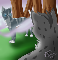 Ashfur vs Jayfeather (Contest Entry) by DrakynWyrm