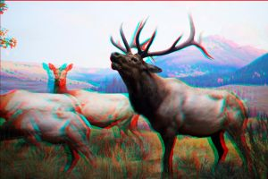 Stereoscopic Deer by dvreflex