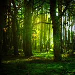 green woods by BaxiaArt