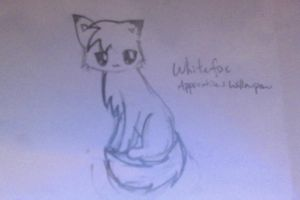 Whitefox Doodle by Raintailkat