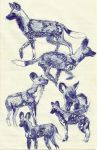 African Wild Dog studies by MommaCabbit