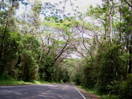 Tree covered road by shawn1976