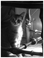 Wiggles curiously n the chair by ForeverKnight