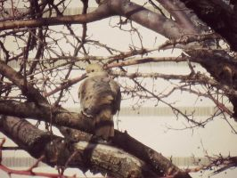 Mourning dove by Stlbluesgirl101