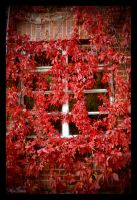 Window to autumn II. by MUA-Maano