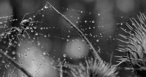 Droplets by xnivalisx