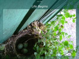 Life Begins by isays