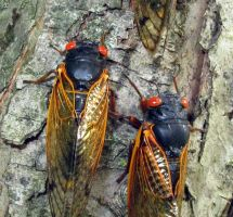 Cicada Invasion 3 by PridesCrossing