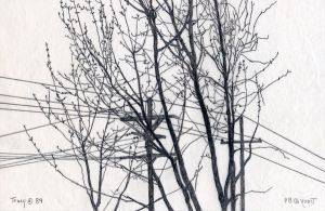 Trees and Wires, Pencil by hank1