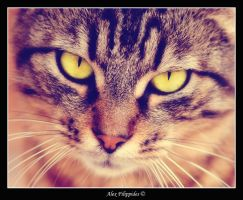 the eye of the tiger by Alexios78