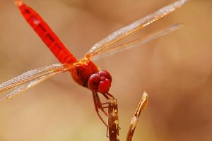 Dragonfly 14 by josgoh