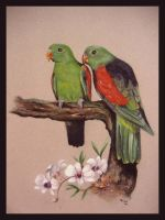 Red Winged Parrots by Sasquatch69
