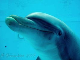 The beauty of a dolphin by Call-Me-Starlet