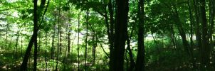 woods around me (old pic) by Thylacine333
