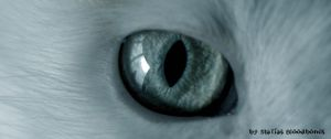 Feline's eye by MatiasBloodbones