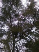 The Trees and Me - Garden - 2013-04-04.3 by Kay-March