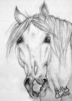 Horse portrait by hollybambam