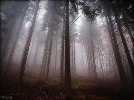Foggy Forest II by Weissglut
