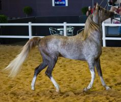 STOCK - 2014 Total Equine Expo-95 by fillyrox