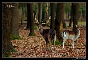 Oh Deer by Jna1985