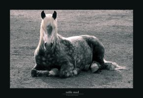 Noble Steed by Gregoria