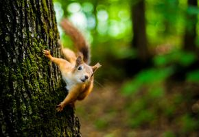 Squirrel by Garet-Neall