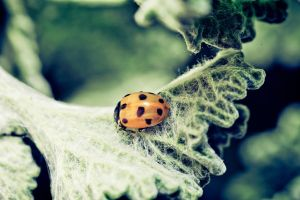 Ladybug by Wings-of-Light