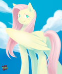 Fluttershy by norang94