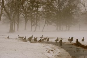 Geese 2 by TryingJustHardEnough