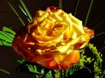 A rose for Eileen by Dieffi