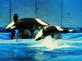 Upside Down by OECDLapushfan101