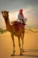 Camel by Special-Hussein