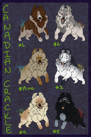 Canadian Crackle Pups by ElysianImagery